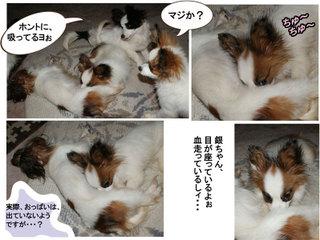 Bulog2011219a_2
