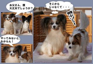 Bulog201159c