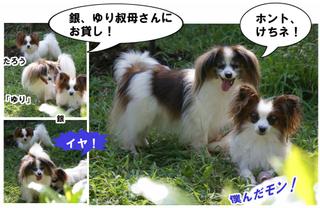 Bulog2011930l