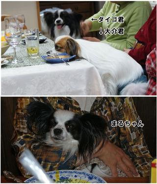 Bulog20111127l