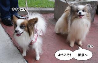 Blog2015916dsc08433