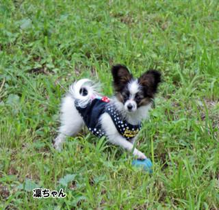 Blog2015916dsc08444