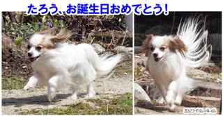 Blog201646