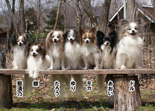 Blog201646dsc09877