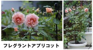 Blog2016722bara2