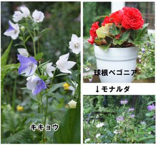 Blog2016722d