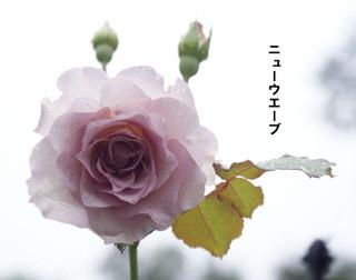 Blog2016722dsc00861