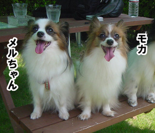 Blog201697dsc00456