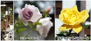 Blog20161022rose3