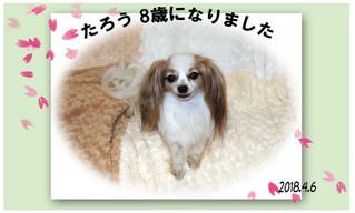 Blog201846