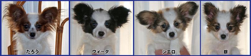 Satooyabosyuu201011a
